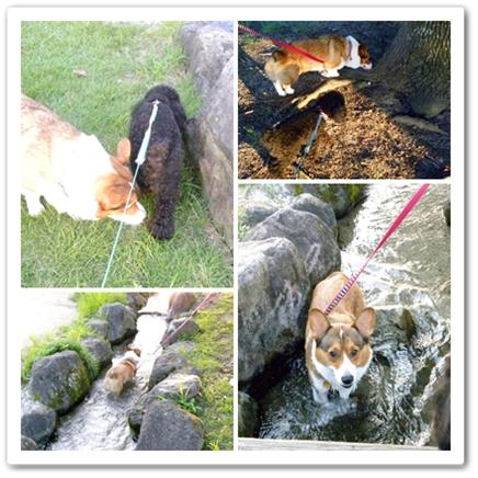 cats6_20090827190849.jpg