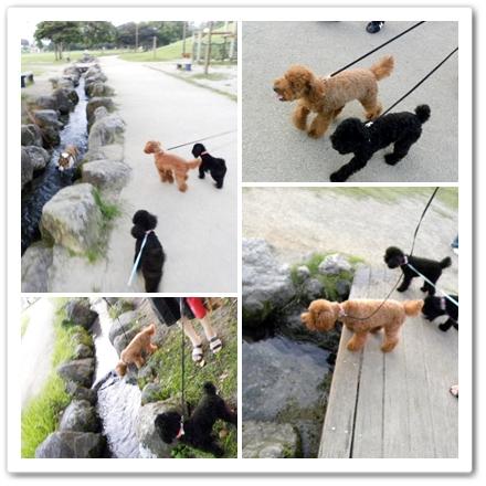 cats8_20090827191004.jpg
