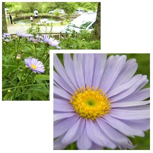 page1_20090729042202.jpg