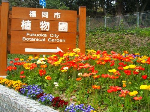s-植物園DSCF7596