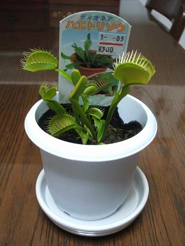 s-植物DSCF8293