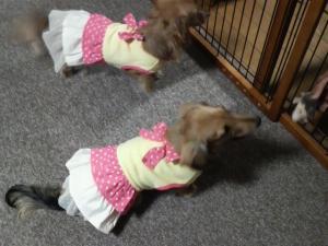 2008.11スカート1