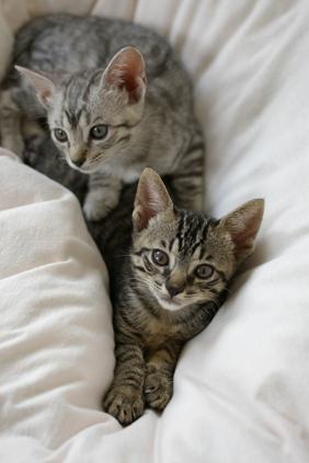 ミー&シマ