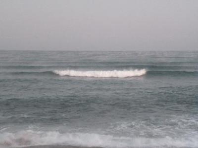 20081129hama.jpg