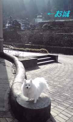 080320姫ゴン朝散歩
