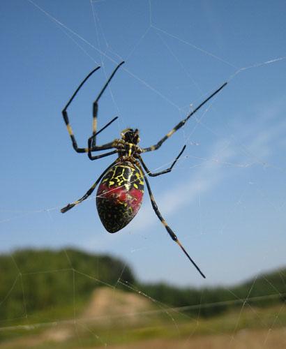 女郎蜘蛛01