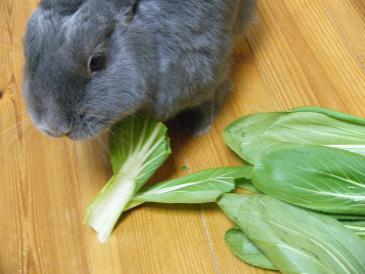 青梗菜の茎