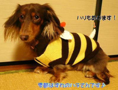 ハチのモカ2