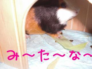 PICT0001_20090906135233.jpg