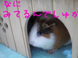 PICT0001_20090919115047.jpg