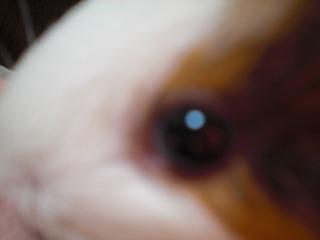 PICT0002_20081222061144.jpg