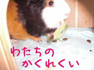 PICT0002_20090906135239.jpg