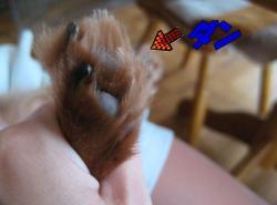 ダンの足周りの毛canvas