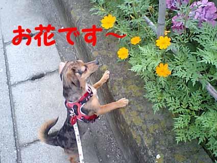 お花です~