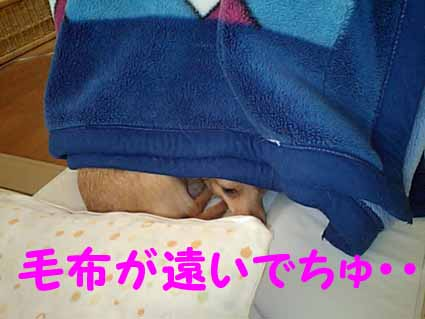 毛布が遠いでちゅ・・