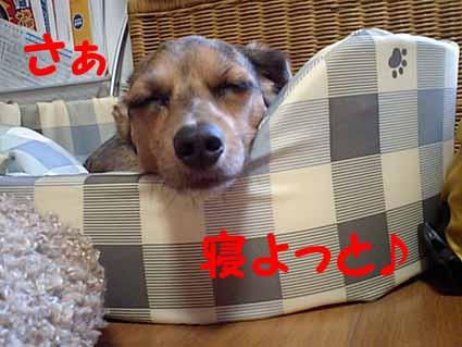 さぁ寝よっと♪