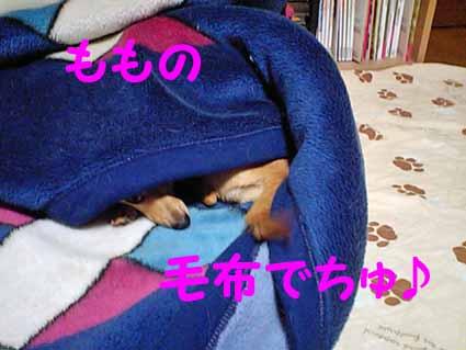 ももの毛布でちゅ♪