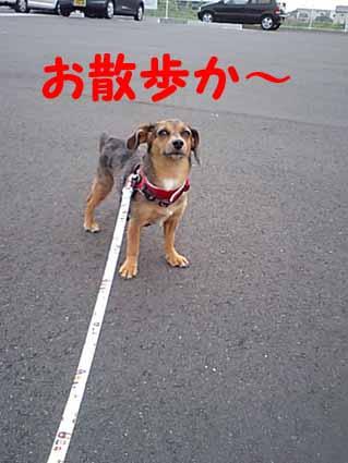 お散歩か~