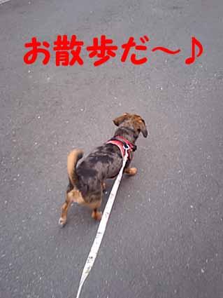 お散歩だ~♪