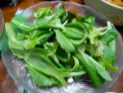 サラダ菜の栽培