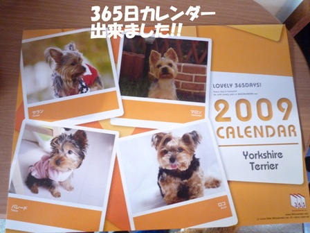P1000734 コピー