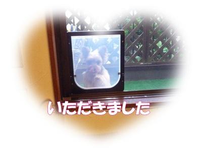 P1020523CP.jpg
