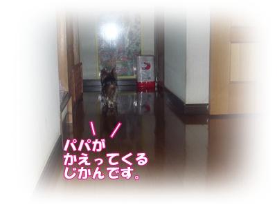 P1030321.jpg