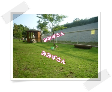 P1030343.jpg