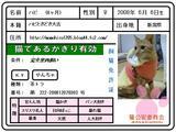 ハピ免許証2