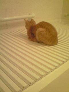 お風呂の蓋の上6