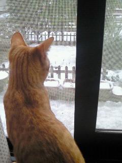 雪が降った1