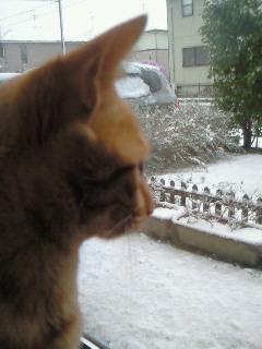 雪が降った2