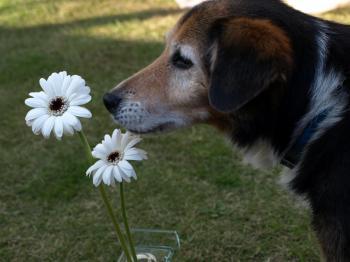 お花とロジャー君