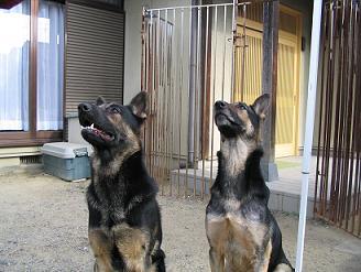 タイガとりん2009お正月