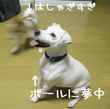 IMG_2197_convert_20090106134228.jpg