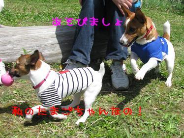 IMG_4053.jpg
