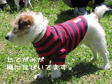 IMG_4055.jpg