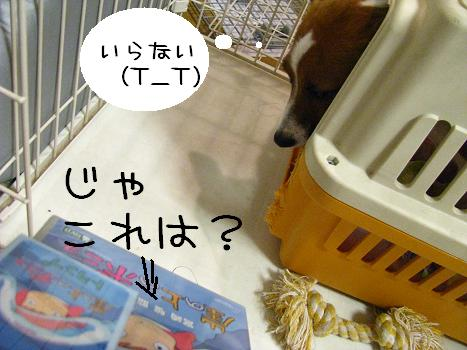 IMG_5954.jpg