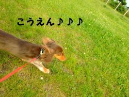 2009_06090036.jpg