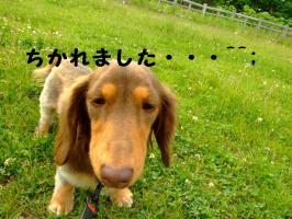 2009_06090103.jpg