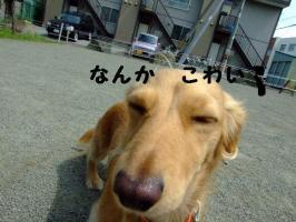 2009_06100057.jpg