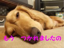2009_07120032.jpg