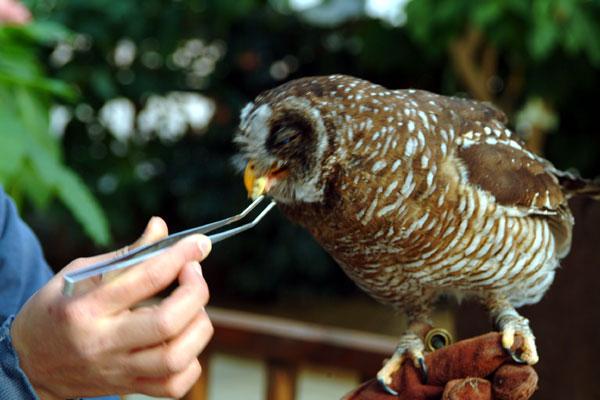 神戸花鳥園DSCF0157
