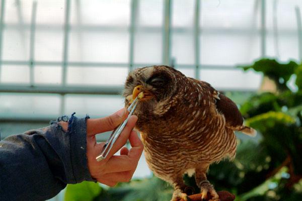 神戸花鳥園食事中DSCF0162