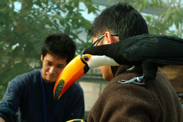 神戸花鳥園オニオオハシDSCF0171
