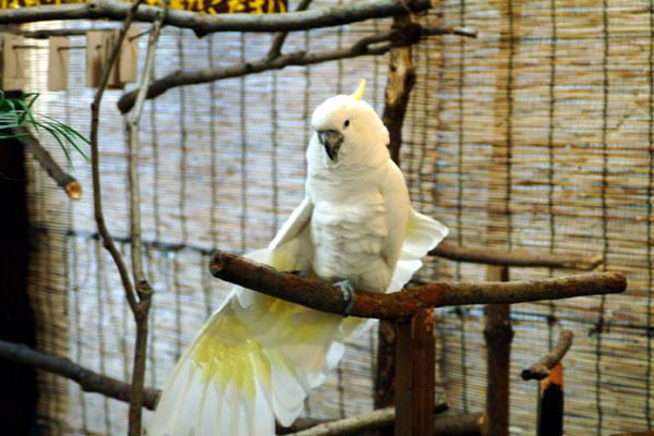 神戸花鳥園DSCF0355オウム