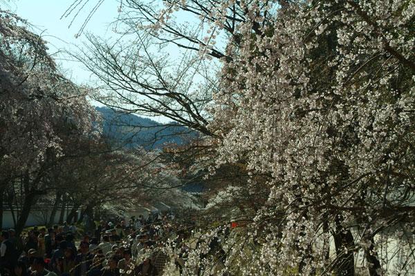 2011-04-06_0926.jpg