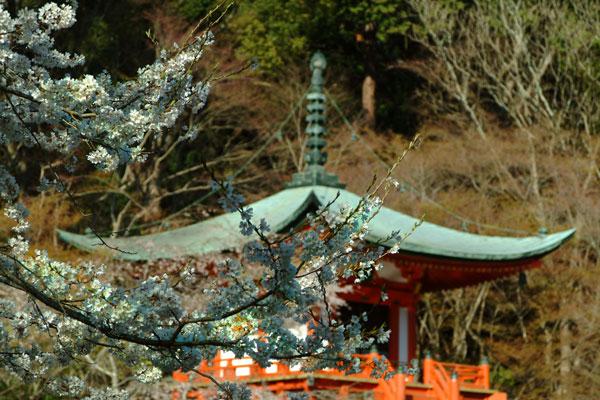 2011-04-06_0974.jpg