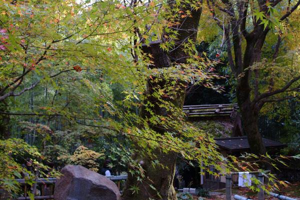 2011-11-27_2392.jpg