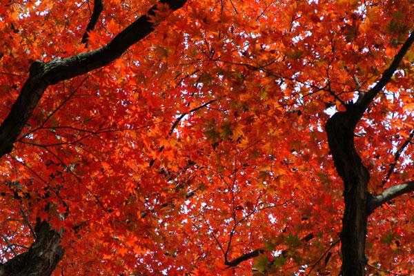 2011-11-27_2496.jpg